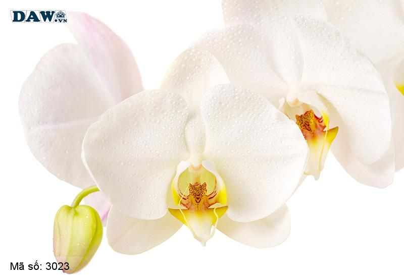 3023 Tranh dán tường Hàn Quốc | Tranh dán tường hoa lá 3023