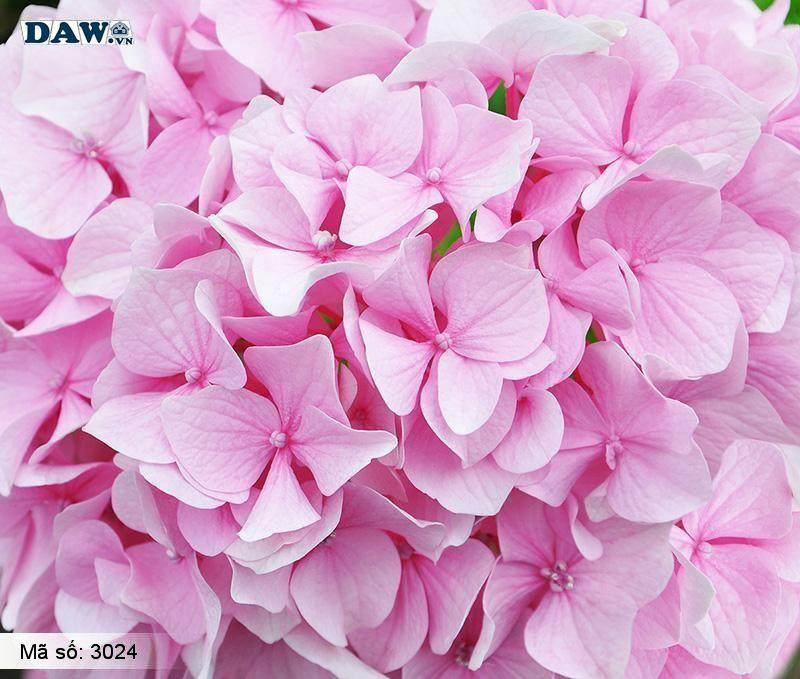 3024 Tranh dán tường Hàn Quốc | Tranh dán tường hoa lá 3024