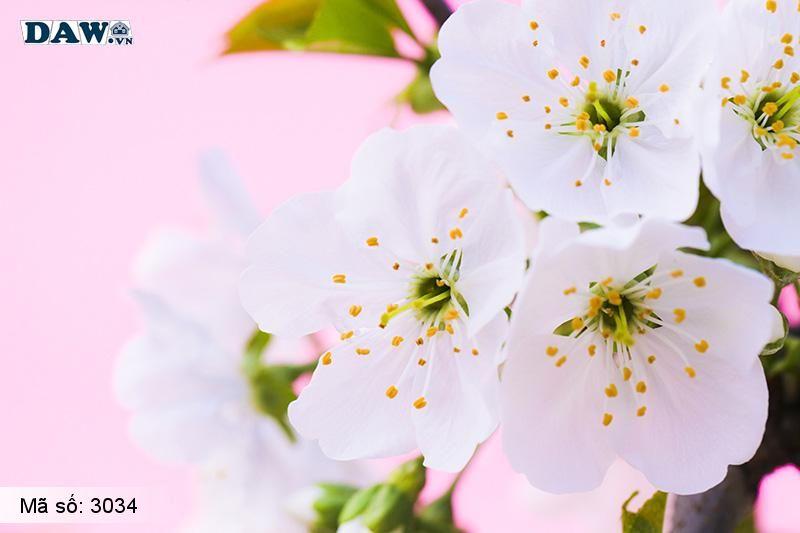 3034 Tranh dán tường Hàn Quốc | Tranh dán tường hoa lá 3034