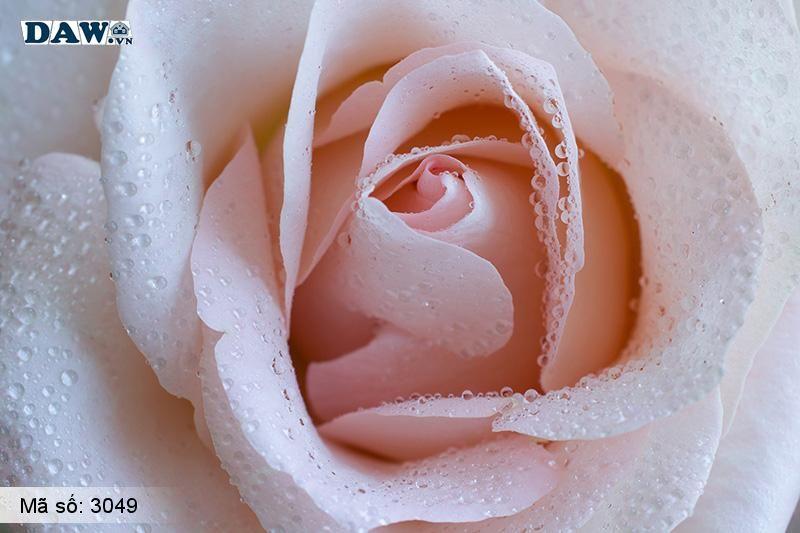 3049 Tranh dán tường Hàn Quốc | Tranh dán tường hoa lá 3049