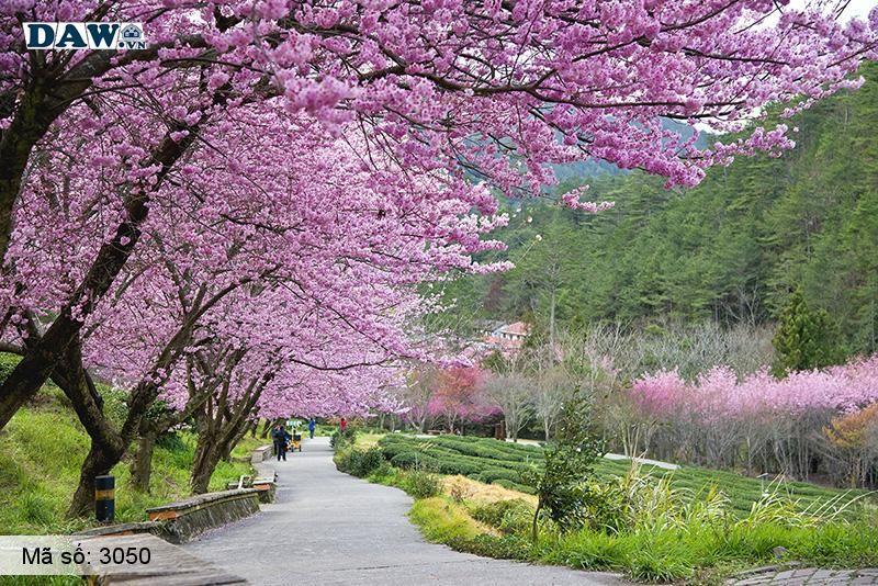 3050 Tranh dán tường Hàn Quốc | Tranh dán tường hoa lá 3050
