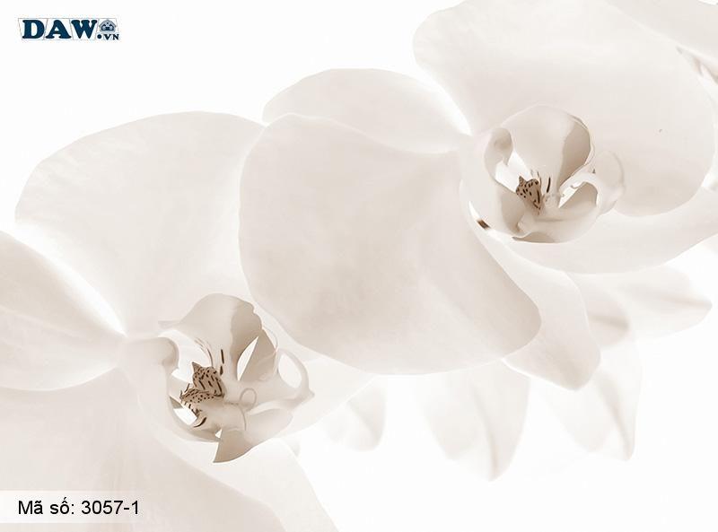 3057-1 Tranh dán tường Hàn Quốc   Tranh dán tường hoa lá 3057-1