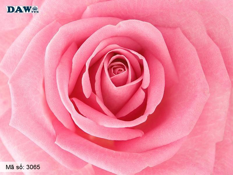 3065 Tranh dán tường Hàn Quốc | Tranh dán tường hoa lá 3065