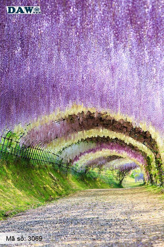3069 Tranh dán tường Hàn Quốc | Tranh dán tường hoa lá 3069