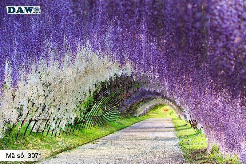 3071 Tranh dán tường Hàn Quốc | Tranh dán tường hoa lá 3071