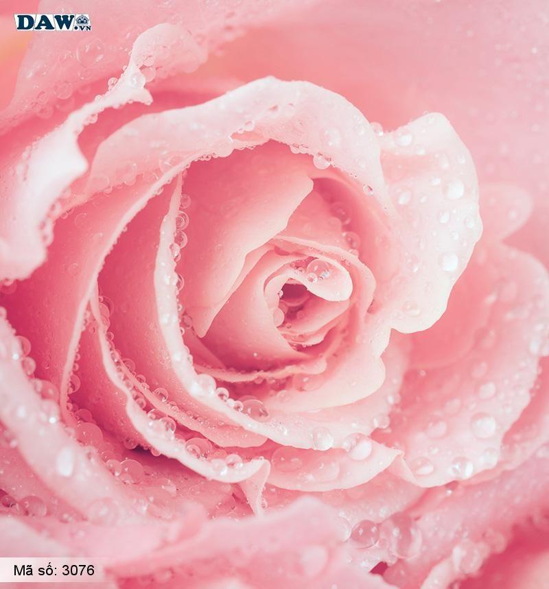 3076 Tranh dán tường Hàn Quốc | Tranh dán tường hoa lá 3076