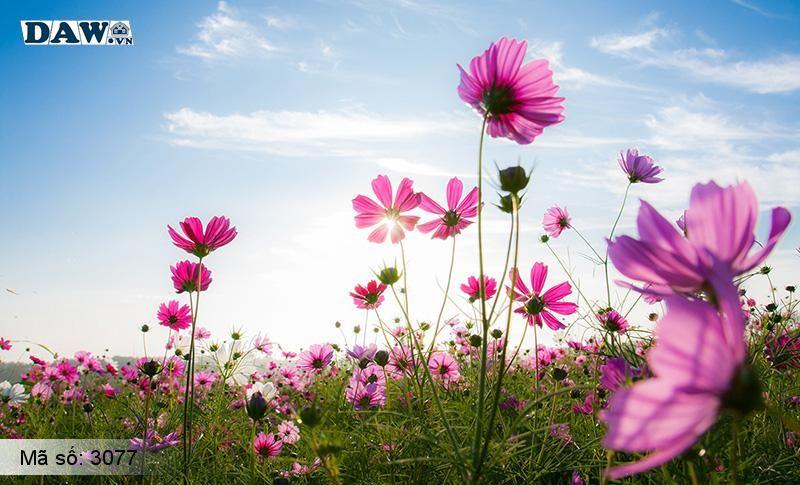 3077 Tranh dán tường Hàn Quốc | Tranh dán tường hoa lá 3077