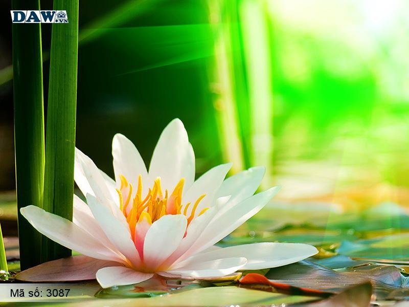 3087 Tranh dán tường Hàn Quốc | Tranh dán tường hoa lá 3087