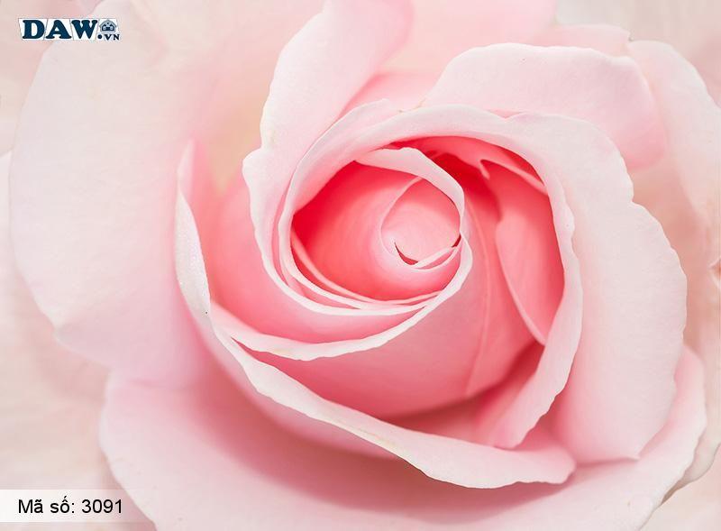 3091 Tranh dán tường Hàn Quốc | Tranh dán tường hoa lá 3091