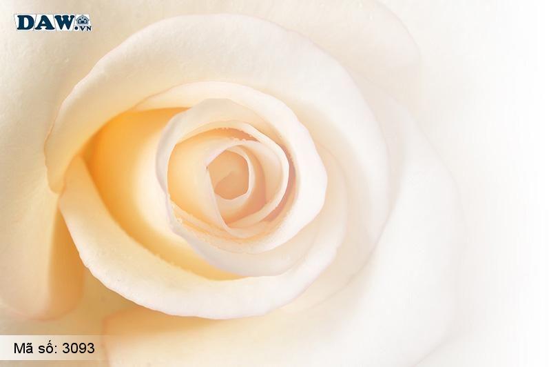 3093 Tranh dán tường Hàn Quốc | Tranh dán tường hoa lá 3093
