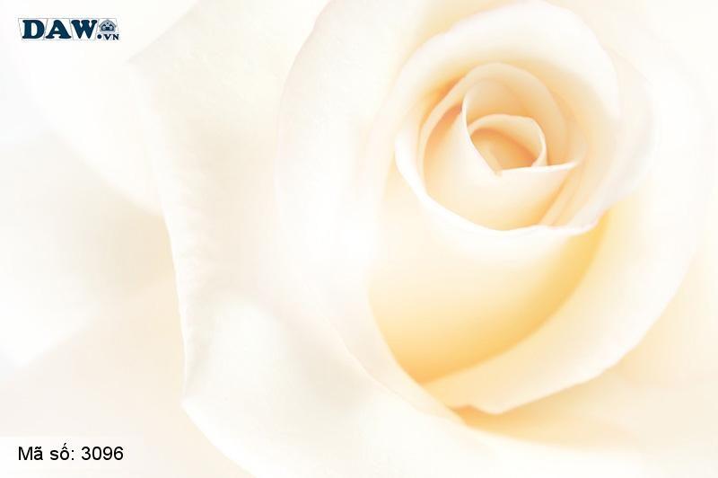 3096 Tranh dán tường Hàn Quốc | Tranh dán tường hoa lá 3096