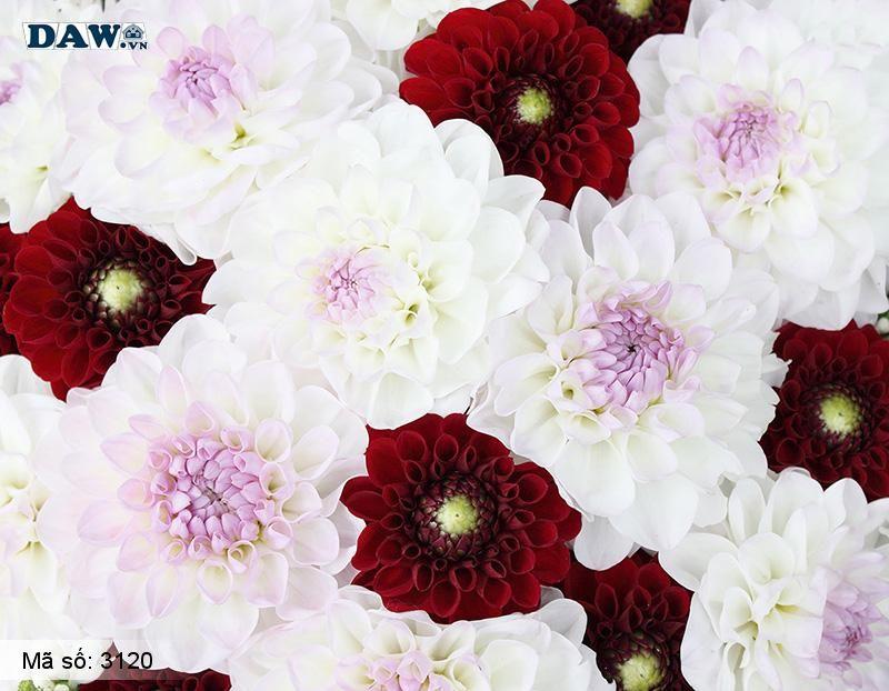 3120 Tranh dán tường Hàn Quốc | Tranh dán tường hoa lá 3120