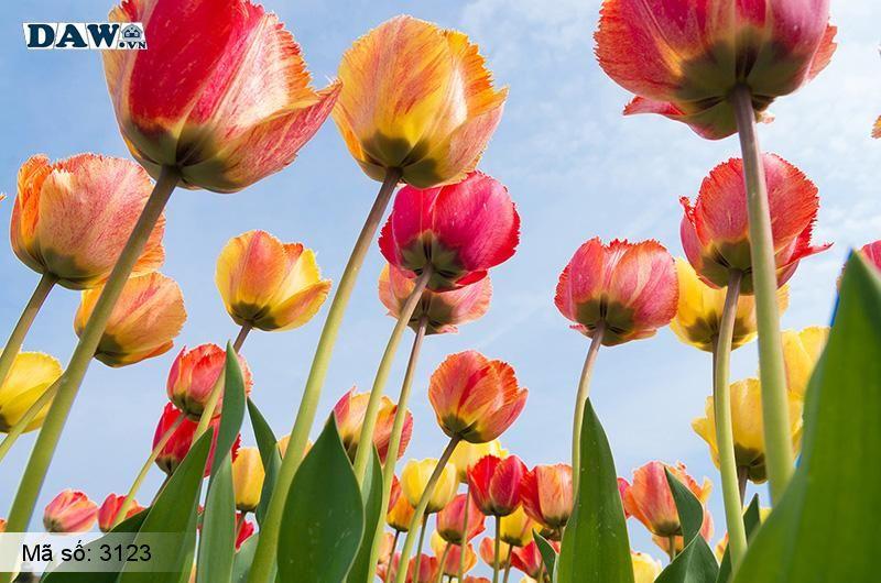 3123 Tranh dán tường Hàn Quốc | Tranh dán tường hoa lá 3123