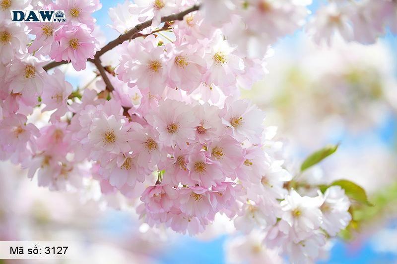 3127 Tranh dán tường Hàn Quốc | Tranh dán tường hoa lá 3127