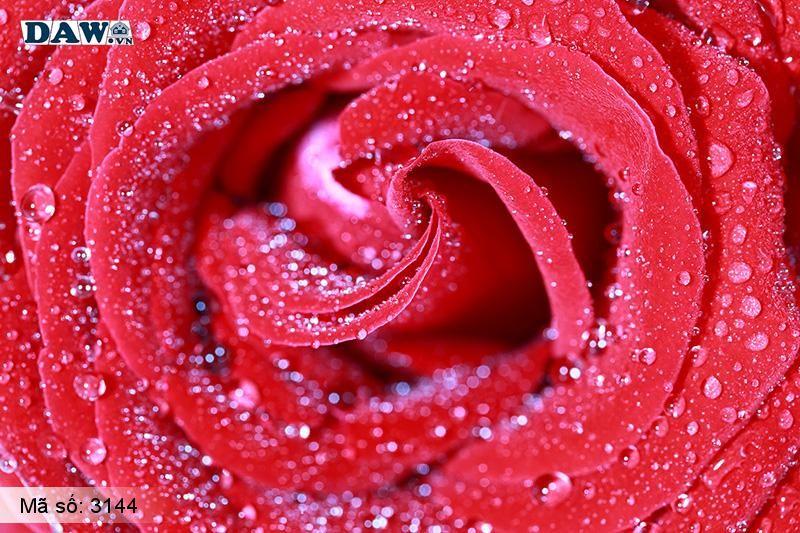 3144 Tranh dán tường Hàn Quốc | Tranh dán tường hoa lá 3144