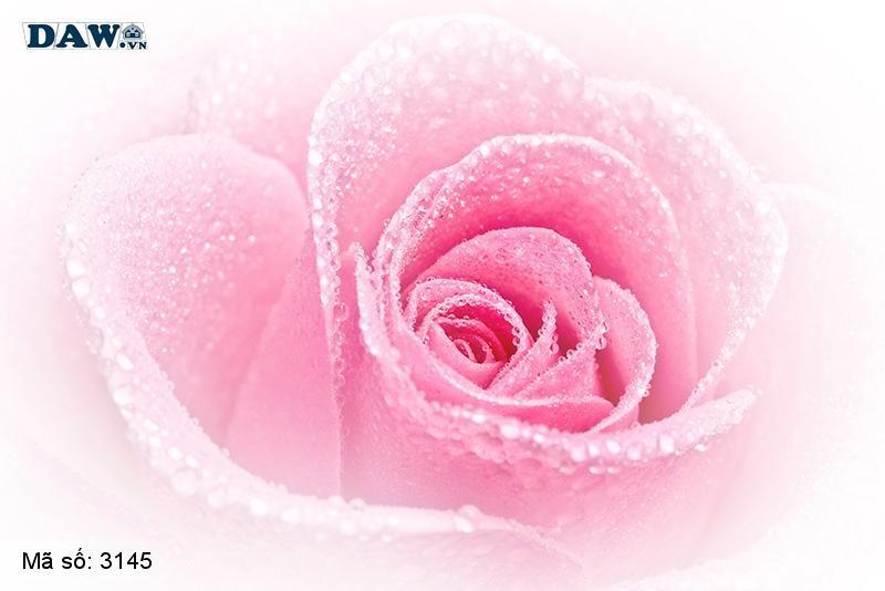 3145 Tranh dán tường Hàn Quốc | Tranh dán tường hoa lá 3145