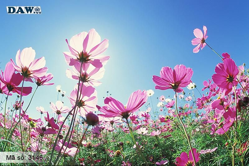 3146 Tranh dán tường Hàn Quốc   Tranh dán tường hoa lá 3146