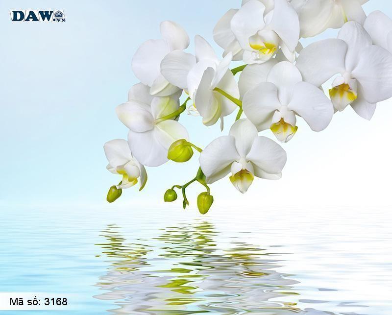 3168 Tranh dán tường Hàn Quốc | Tranh dán tường hoa lá 3168