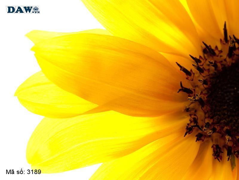 3189 Tranh dán tường Hàn Quốc | Tranh dán tường hoa lá 3189
