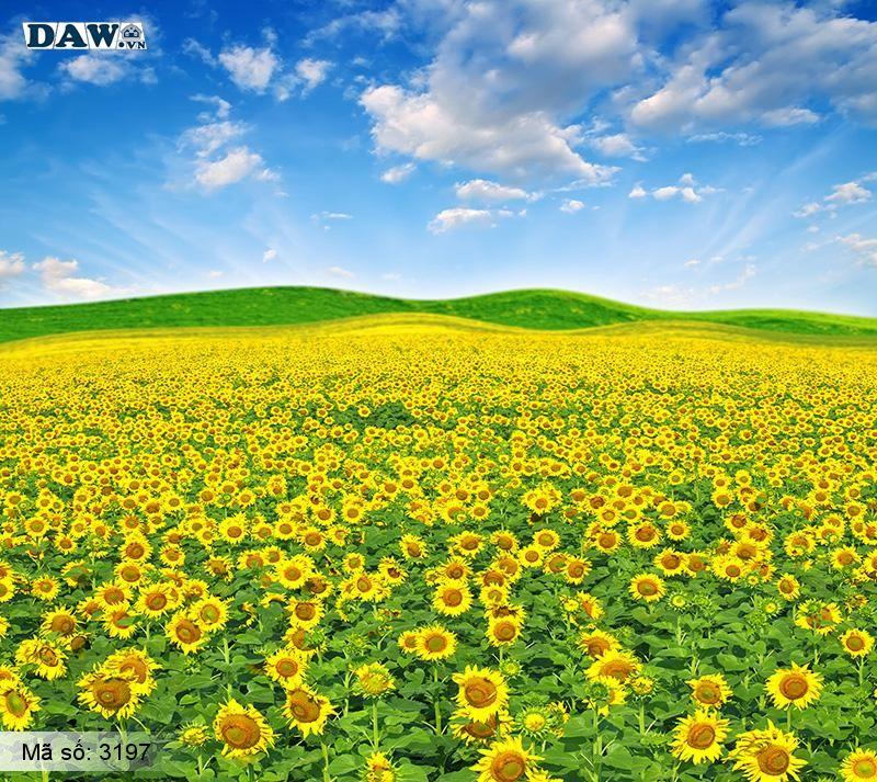 3197 Tranh dán tường Hàn Quốc   Tranh dán tường hoa lá 3197
