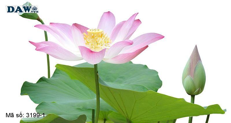 3199-1 Tranh dán tường Hàn Quốc | Tranh dán tường hoa lá 3199-1