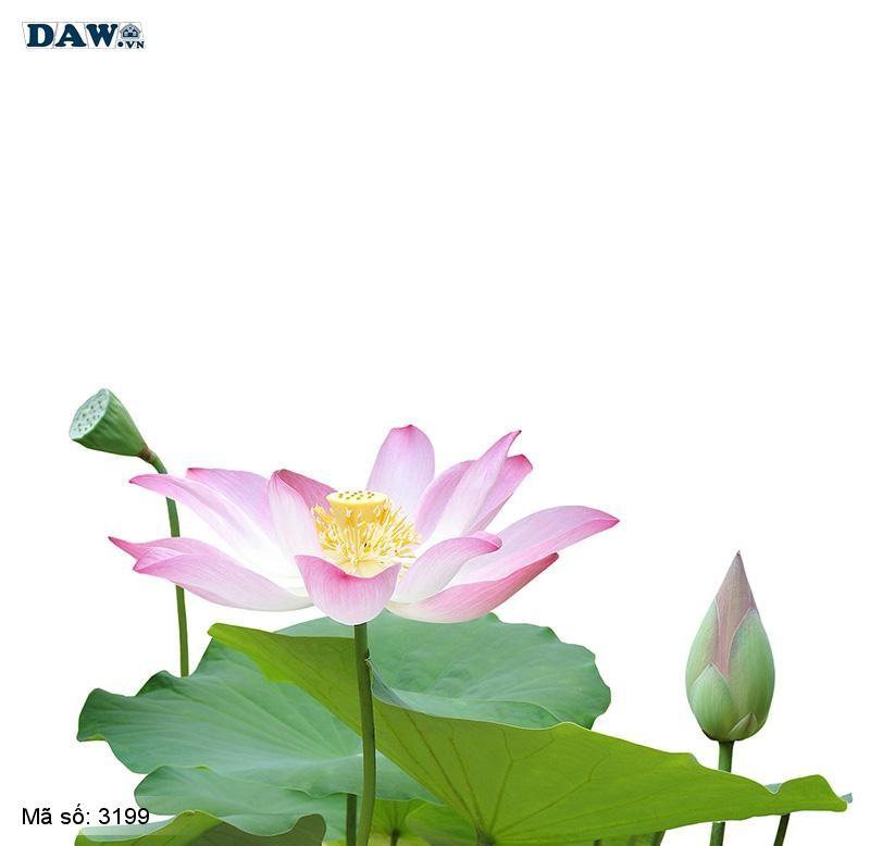 3199 Tranh dán tường Hàn Quốc | Tranh dán tường hoa lá 3199