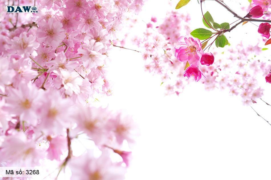 3268 Tranh dán tường Hàn Quốc | Tranh dán tường hoa lá 3268