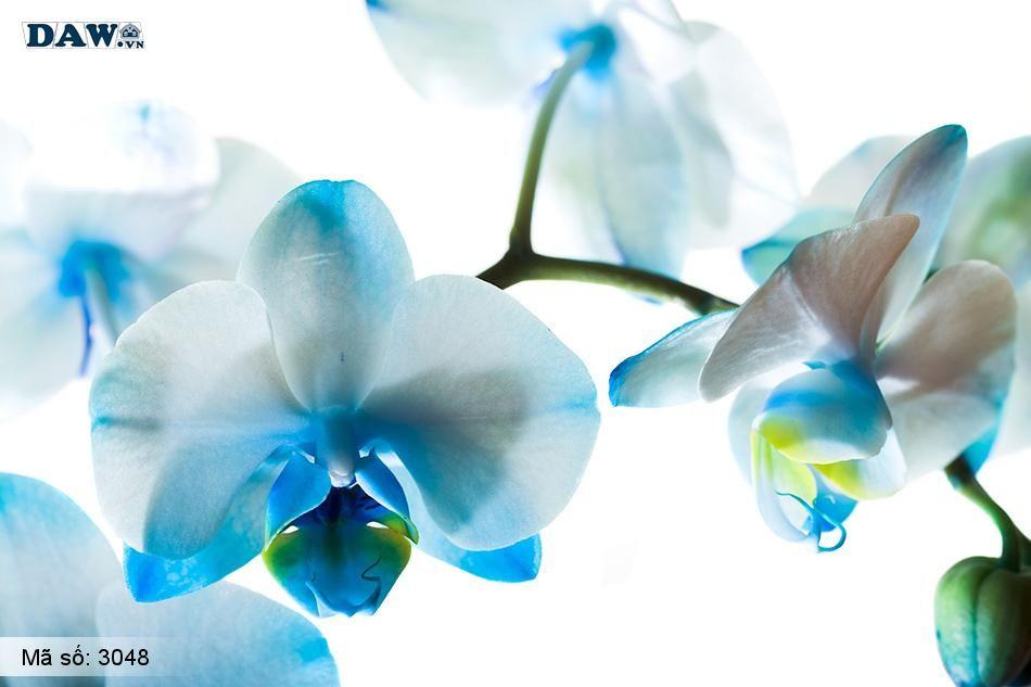 3048 Tranh dán tường Hàn Quốc | Tranh dán tường hoa lá 3048