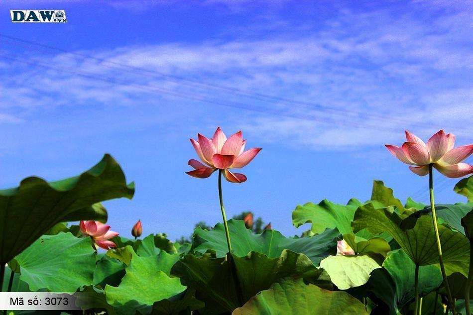 3073 Tranh dán tường Hàn Quốc | Tranh dán tường hoa lá 3073