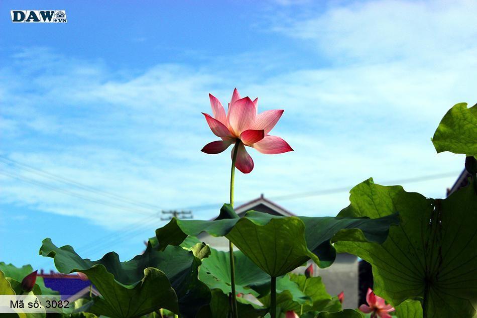 3082 Tranh dán tường Hàn Quốc | Tranh dán tường hoa lá 3082