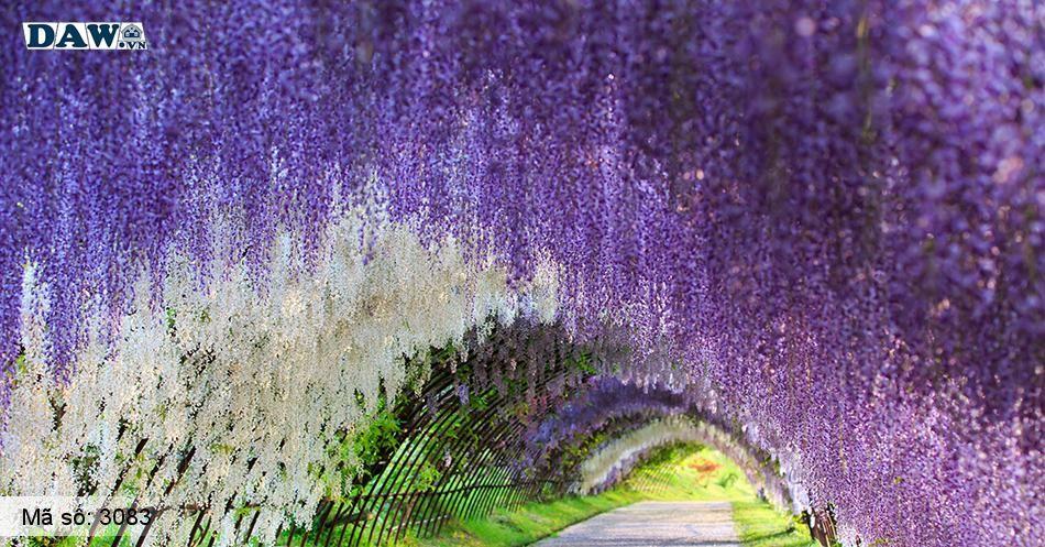 3083 Tranh dán tường Hàn Quốc | Tranh dán tường hoa lá 3083