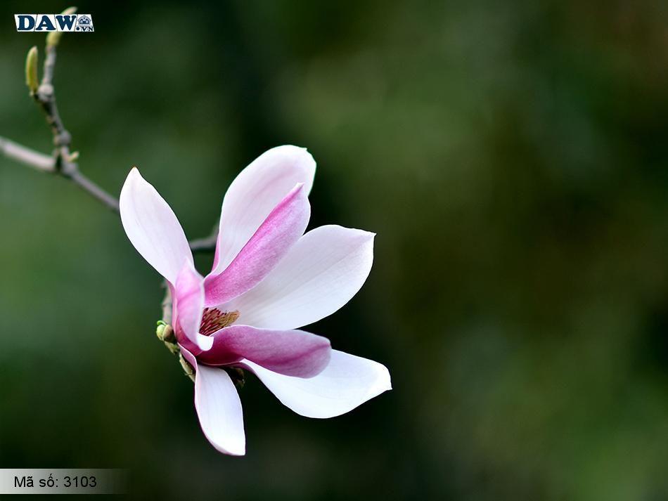 3103 Tranh dán tường Hàn Quốc | Tranh dán tường hoa lá 3103