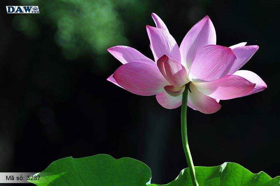 3287 Tranh dán tường Hàn Quốc | Tranh dán tường hoa lá 3287