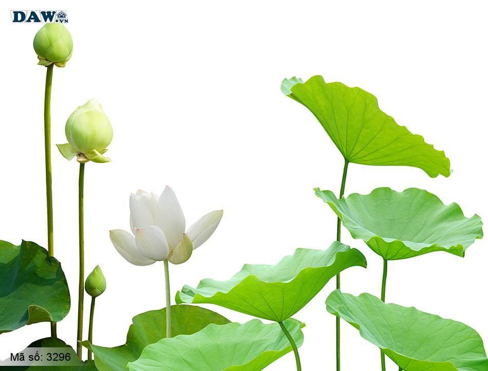 3296 Tranh dán tường Hàn Quốc | Tranh dán tường hoa lá 3296