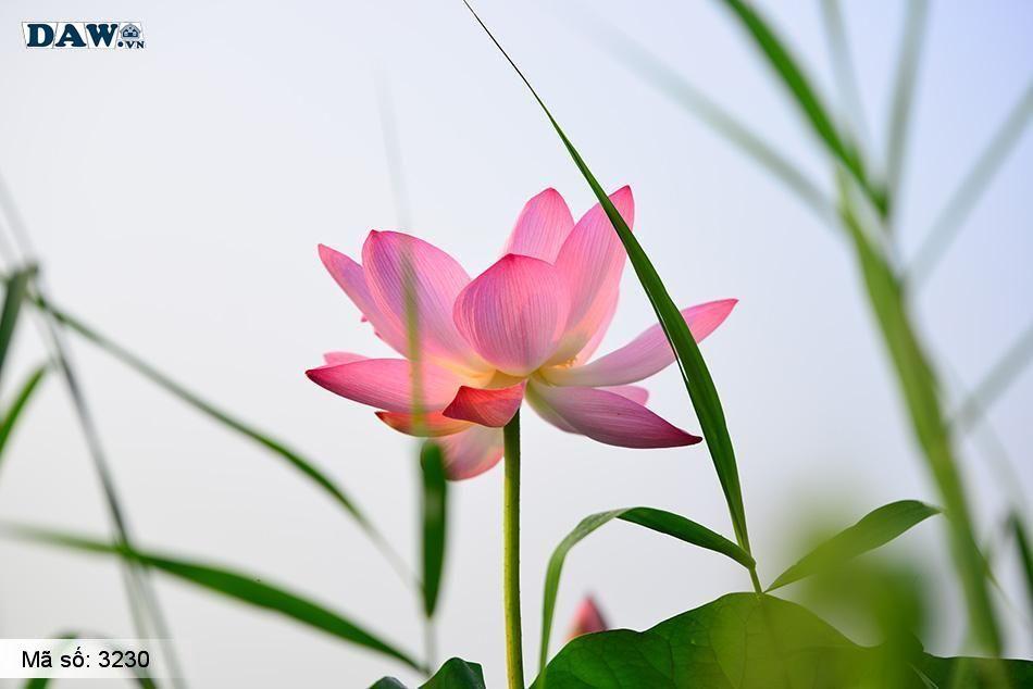 3230 Tranh dán tường Hàn Quốc | Tranh dán tường hoa lá 3230