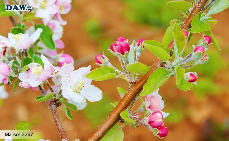 3267 Tranh dán tường Hàn Quốc | Tranh dán tường hoa lá 3267