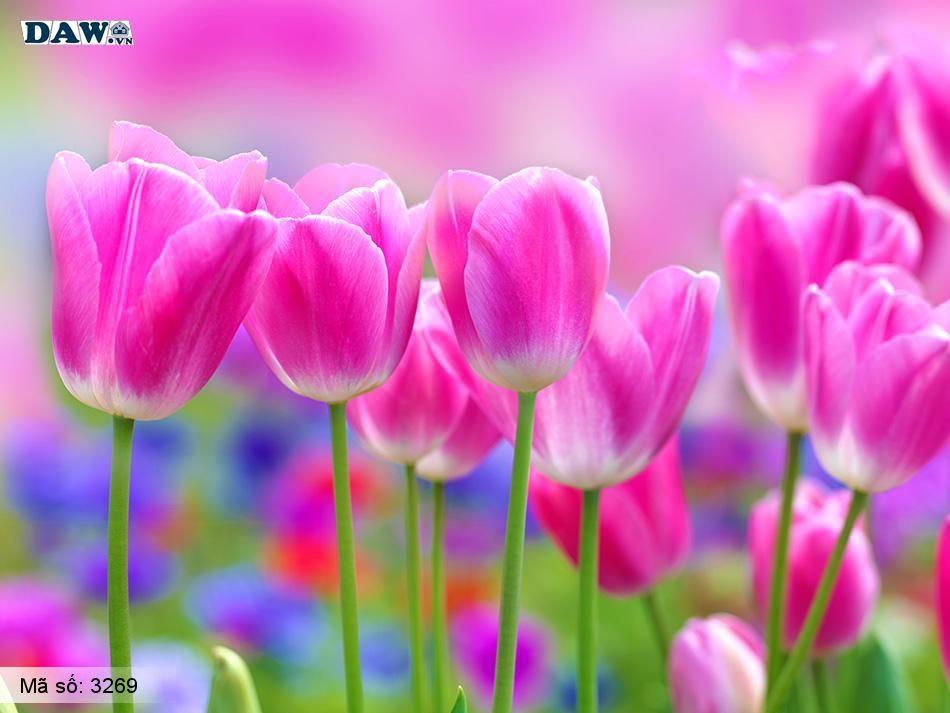 3269 Tranh dán tường Hàn Quốc | Tranh dán tường hoa lá 3269