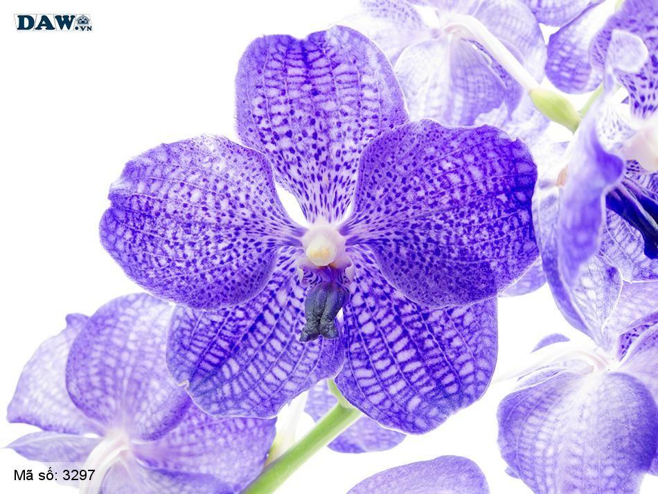 3297 Tranh dán tường Hàn Quốc | Tranh dán tường hoa lá 3297