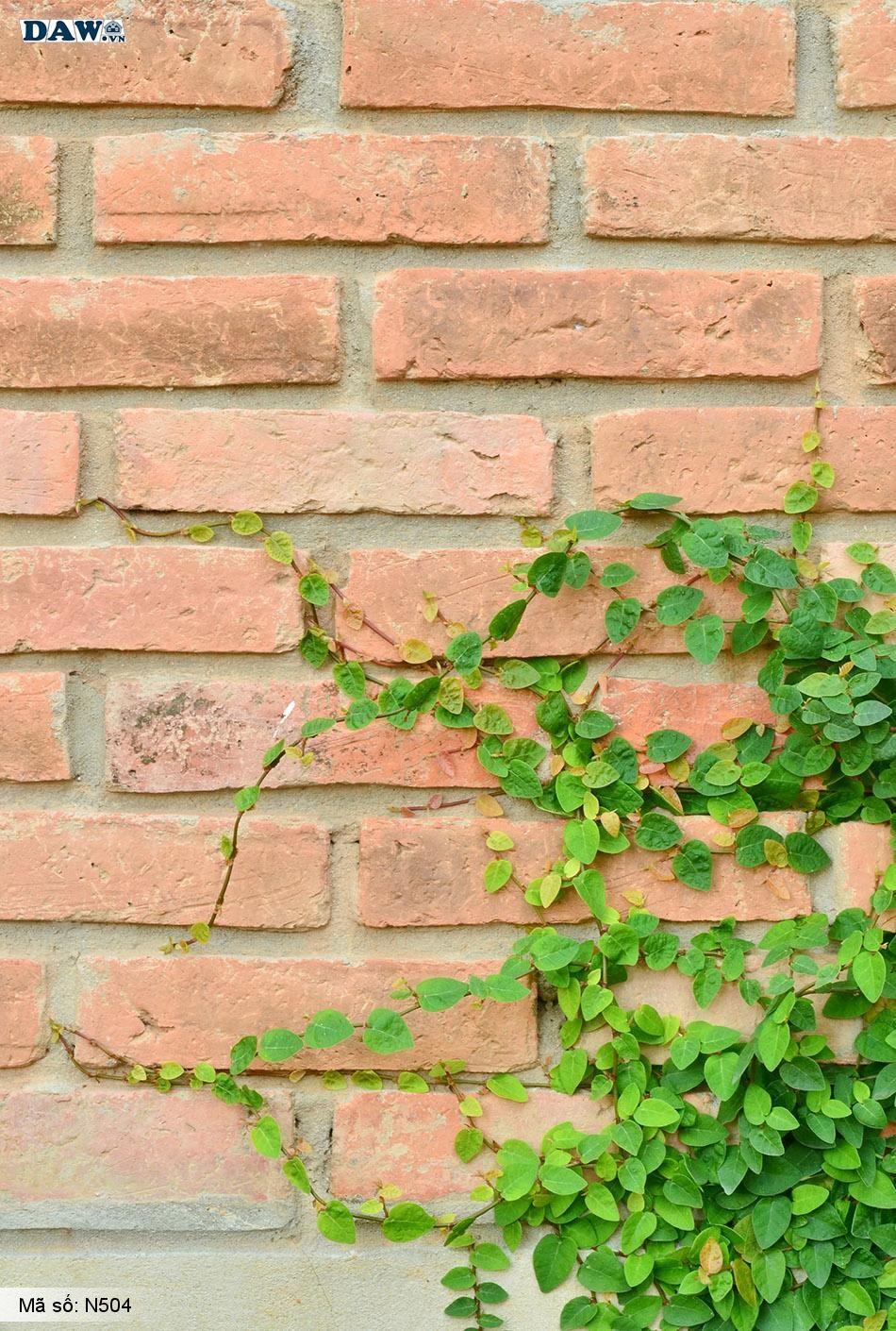 N504 Tranh dán tường Hàn Quốc | Tranh dán tường Dây leo tường N504
