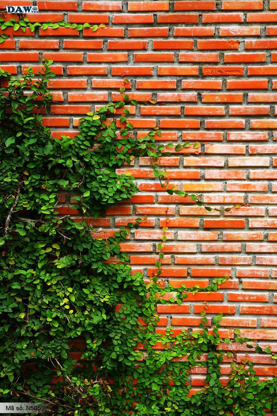 N505 Tranh dán tường Hàn Quốc | Tranh dán tường Dây leo tường N505