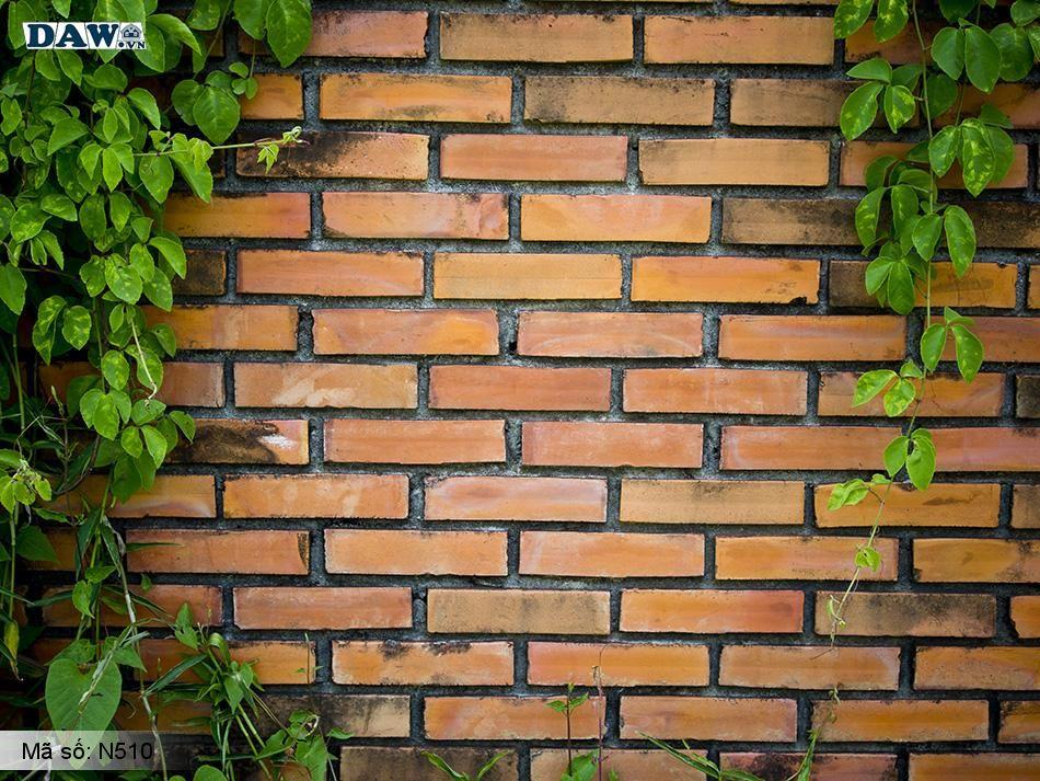 N510 Tranh dán tường Hàn Quốc | Tranh dán tường Dây leo tường N510
