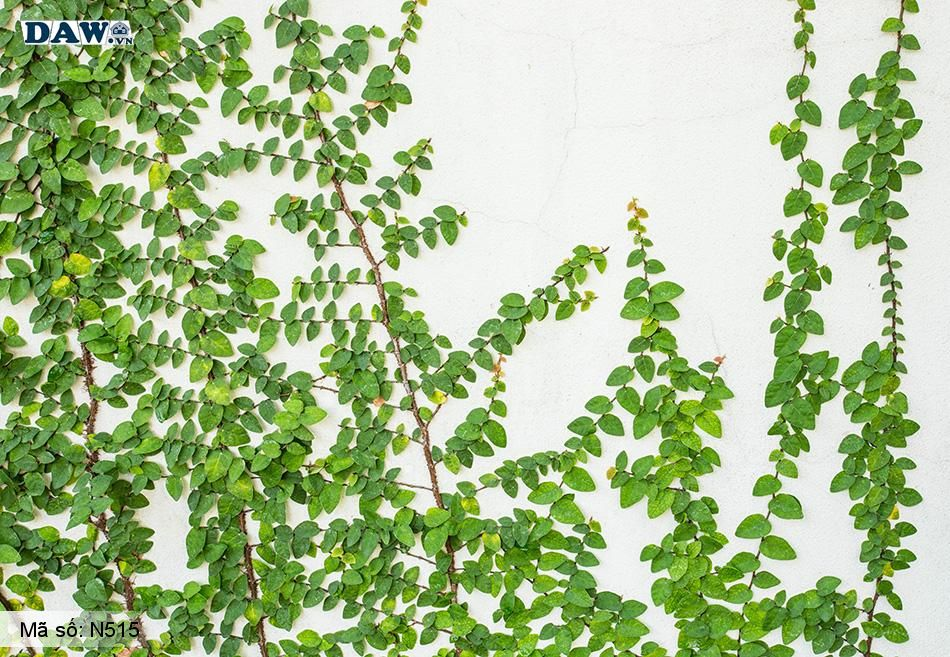 N515 Tranh dán tường Hàn Quốc | Tranh dán tường Dây leo tường N515