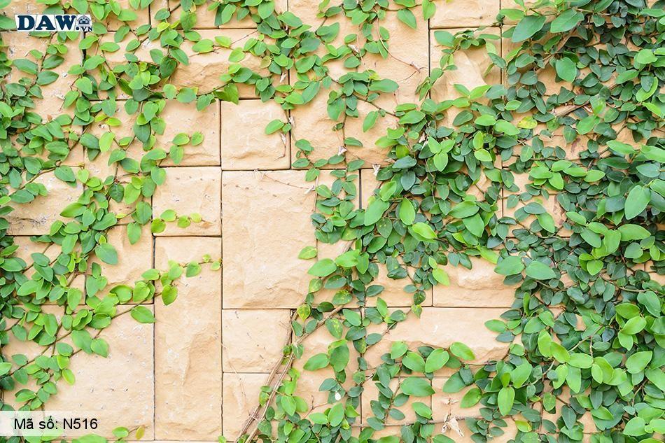 N516 Tranh dán tường Hàn Quốc | Tranh dán tường Dây leo tường N516