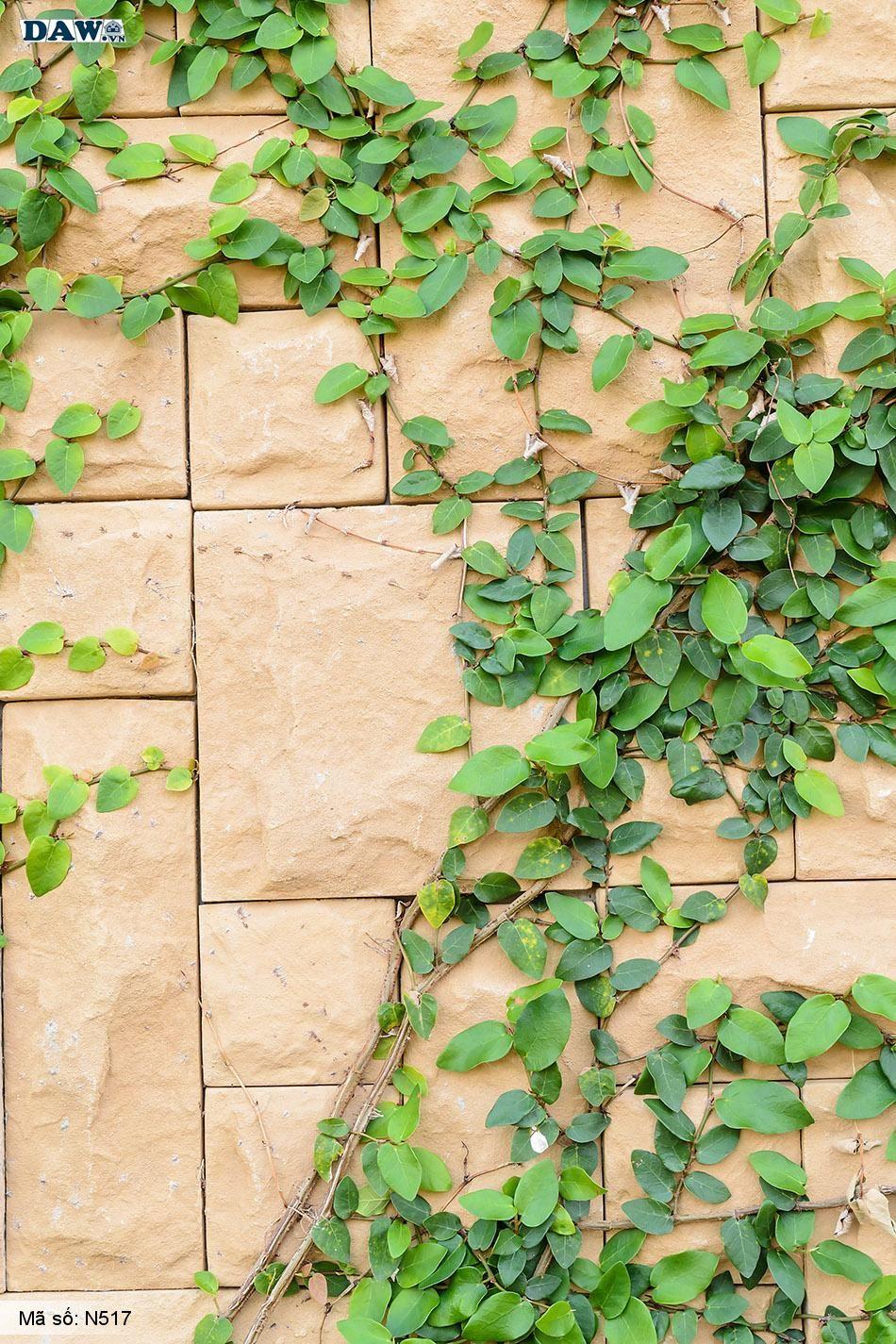 N517 Tranh dán tường Hàn Quốc | Tranh dán tường Dây leo tường  N517