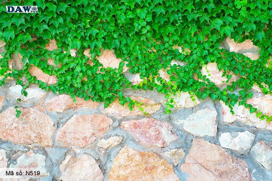 N519 Tranh dán tường Hàn Quốc | Tranh dán tường Dây leo tường N519