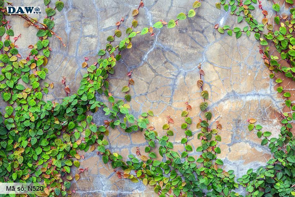 N520 Tranh dán tường Hàn Quốc | Tranh dán tường Dây leo tường N520